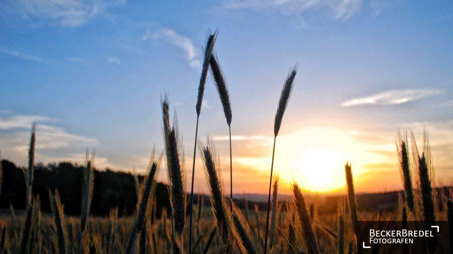 Sonnenaufgang in Elm
