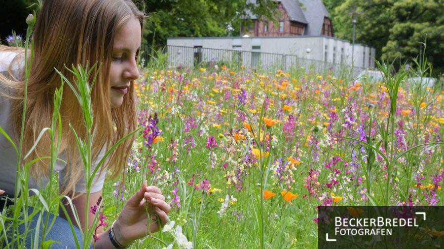 Blumenwiese auf dem Halberg