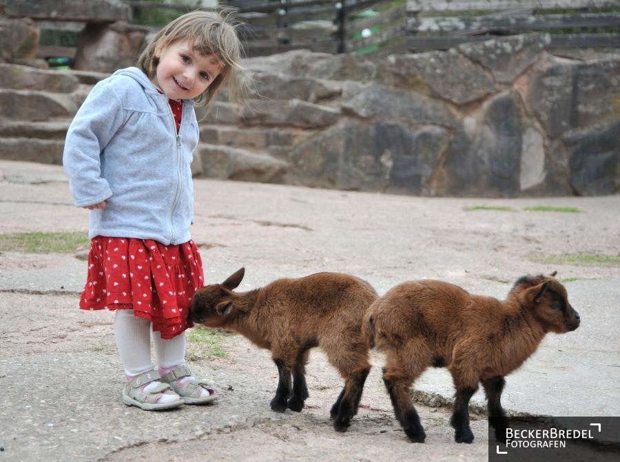Tierkinder im Saarbrücker Zoo