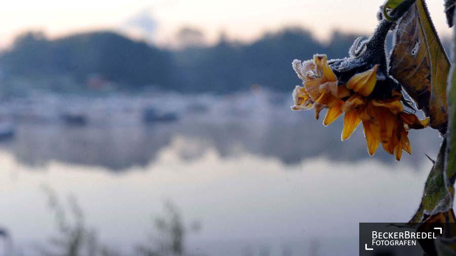 Winteranfang am Osthafen